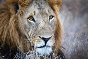 Kenya 2014 - ©Benjamin Sadd 13684