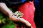 Chameleon, Marangu